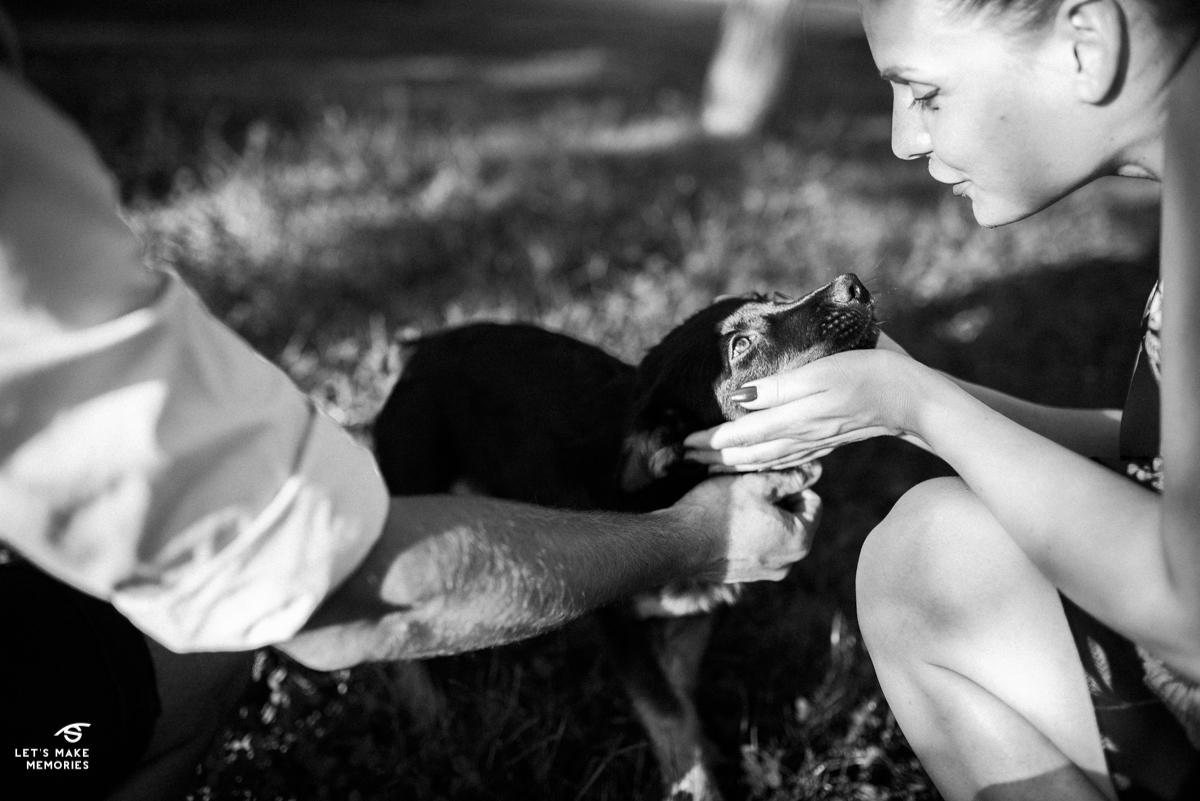 bride petting stray dog