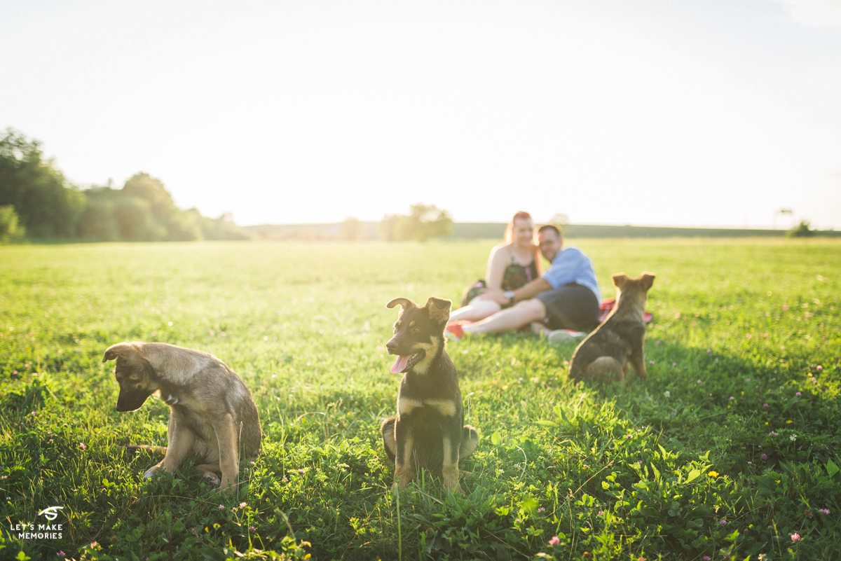 stray dogs crash engagement session