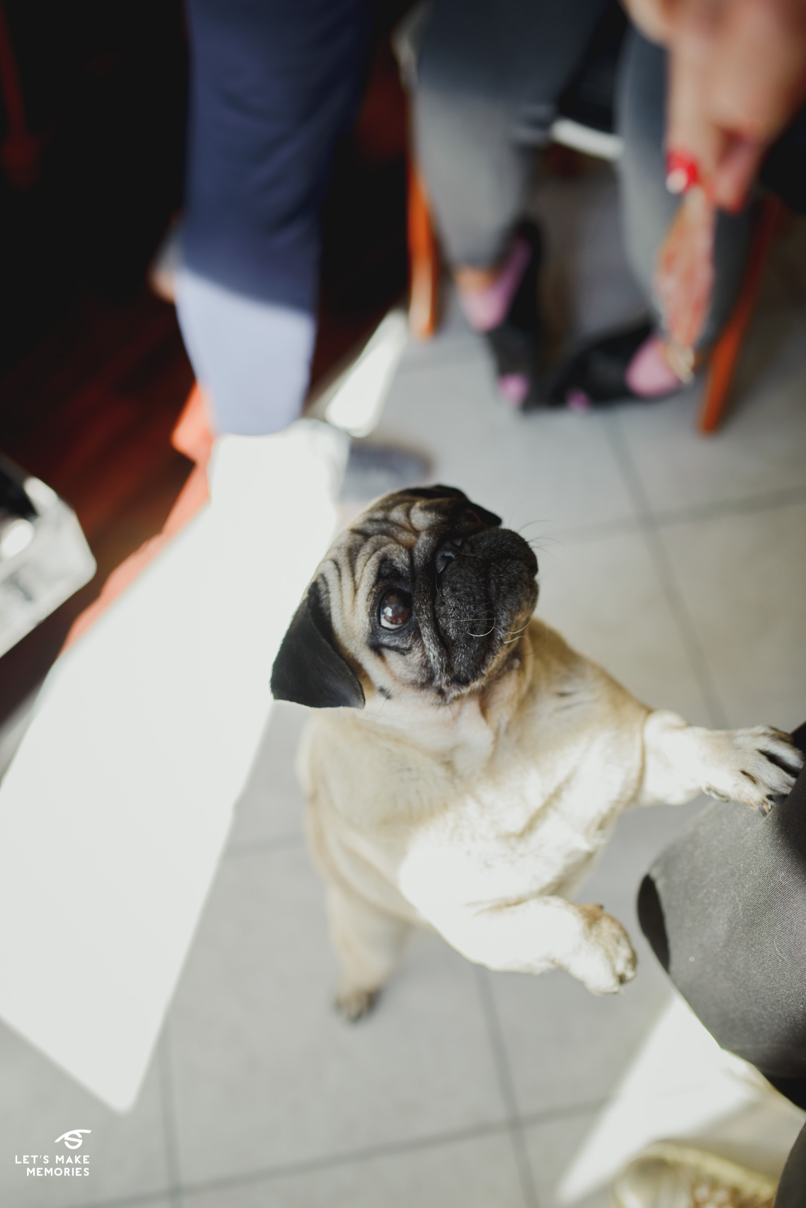 brides dog begging for a treat